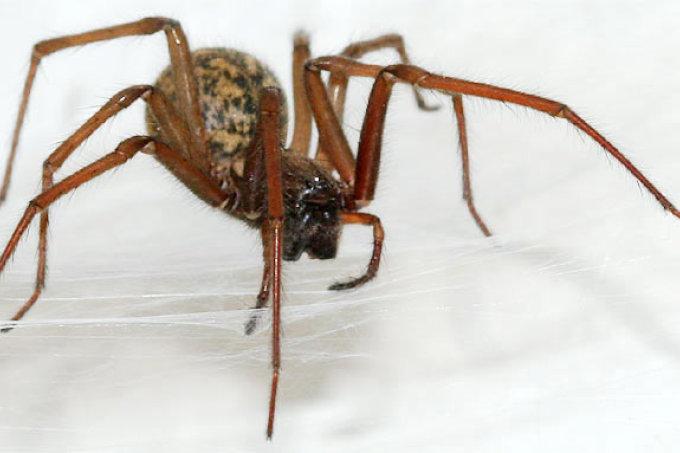 insekten und spinnen nabu bremen. Black Bedroom Furniture Sets. Home Design Ideas